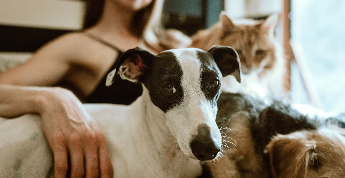 Benefits Of Pet Ownership When Renting - Charter Place