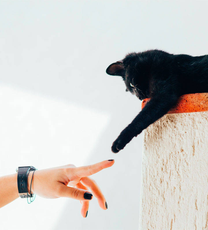 Benefits Of Pet Ownership When Renting